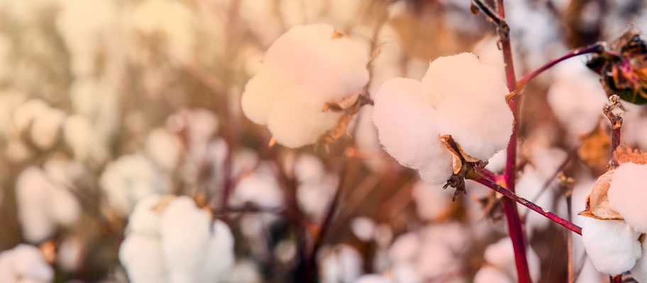 The Different Types of Cotton